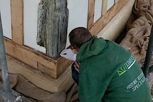 KGJ Lime Plastering Experts at work in Essex